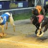 Youghal Greyhound Racing